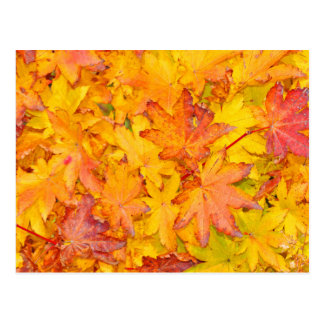 Red And Yellow Decorative Maple Leafs Fall Postcard