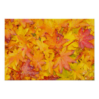 Red And Yellow Decorative Maple Leafs Fall Poster