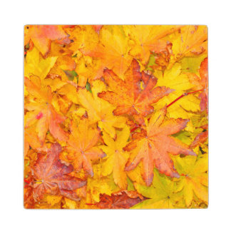 Red And Yellow Decorative Maple Leafs Fall Wood Coaster