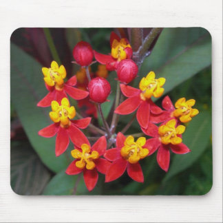 Red and yellow flower mousepad (butterfly weed)