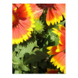 Red and Yellow Flowers Postcard