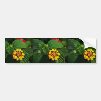 Red and Yellow Lantana Flower and Green Leaves Bumper Sticker