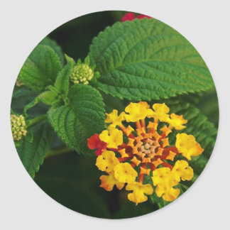 Red and Yellow Lantana Flower and Green Leaves Stickers