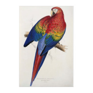 Red And Yellow Macaw by Edward Lear Acrylic Print
