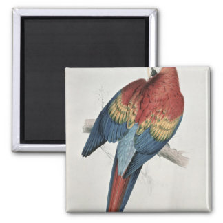Red and Yellow Macaw Magnet
