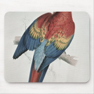Red and Yellow Macaw Mouse Pad