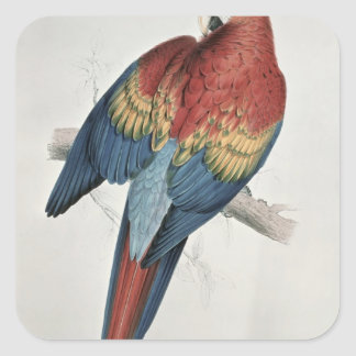 Red and Yellow Macaw Square Sticker