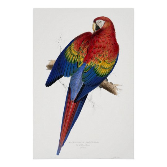 Red and Yellow Maccaw Poster