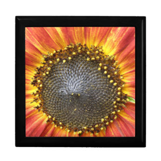 Red and Yellow Sunflower Gift Box