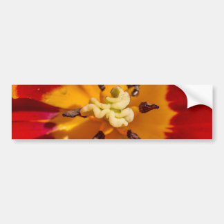 Red and Yellow Tulip Flower Bumper Sticker
