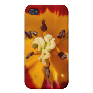 Red and Yellow Tulip Flower Case For The iPhone 4