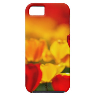 Red and Yellow Tulips iPhone 5 Covers