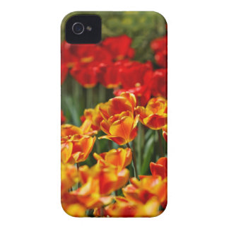 Red and Yellow Tulips Case-Mate iPhone 4 Case