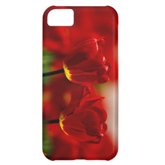 Red and Yellow Tulips iPhone 5C Cases