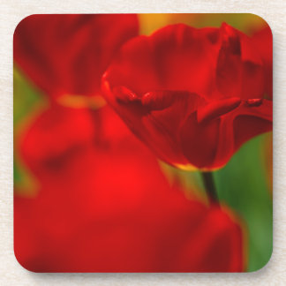 Red and Yellow Tulips Coaster