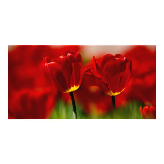 Red and Yellow Tulips Personalized Photo Card
