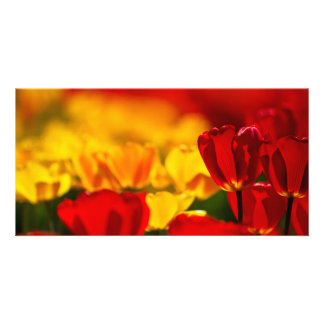 Red and Yellow Tulips Customized Photo Card