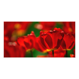 Red and Yellow Tulips Custom Photo Card