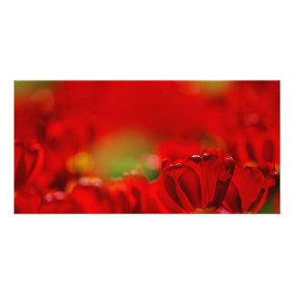 Red and Yellow Tulips Photo Card