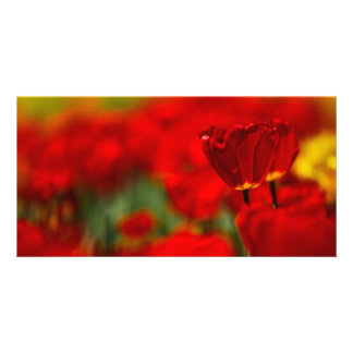 Red and Yellow Tulips Photo Card Template