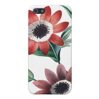 Red anemones vintage illustration iPhone 5/5S case