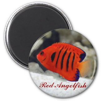 Red Angelfish Sticker Magnet