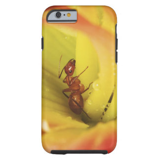Red Ant, Formica spp. Tough iPhone 6 Case