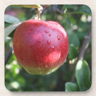 Red Apple Set of 6 Coasters
