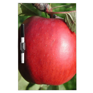 Red Apple with a Leaf Dry Erase Board