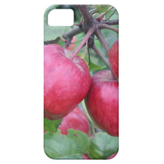Red Apples in the Tree iPhone 5 Cases