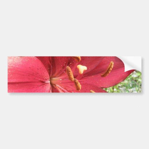 Red Asiatic Lily Bumper Sticker