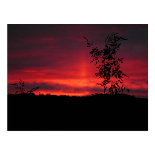 Red August Sky 18a Postcard
