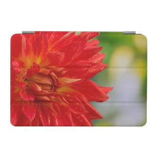 Red autumn dahlia flower in the garden iPad mini cover