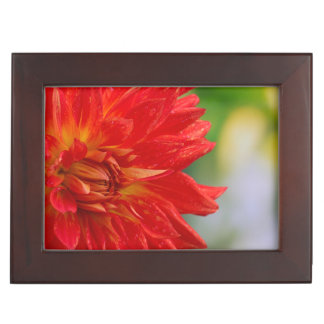 Red autumn dahlia flower in the garden keepsake box