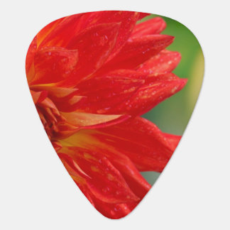 Red autumn dahlia flower in the garden plectrum