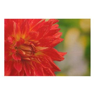 Red autumn dahlia flower in the garden wood print