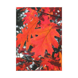 Red autumn leaves canvas prints