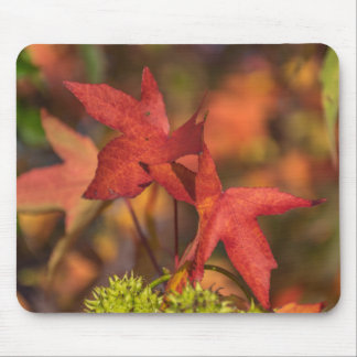 Red autumn leaves mousepad