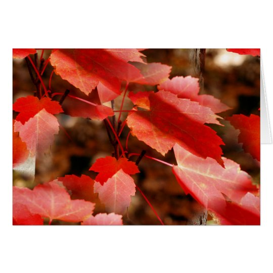 Red Autumn Leaves Nature Photography Card