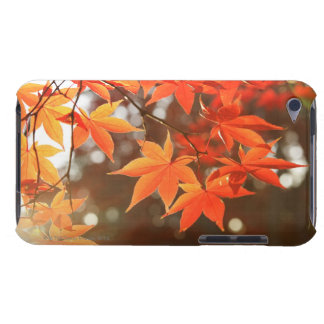 Red Autumn Maple leaves Barely There iPod Case