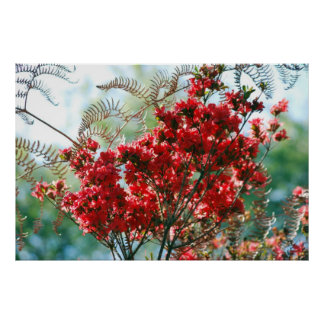Red Azaleas and meaning Poster