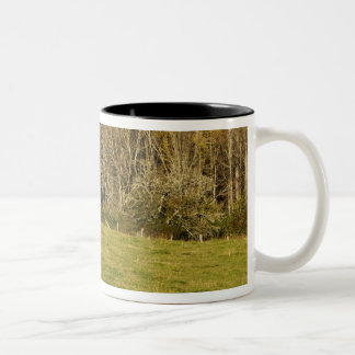 Red barn and fencerow along the Blue ridge Two-Tone Coffee Mug