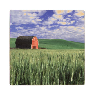 Red barn in wheat & barley field in Whitman 2 Wood Coaster