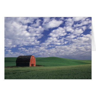 Red barn in wheat & barley field in Whitman Card