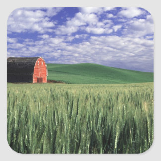 Red barn in wheat & barley field in Whitman Square Sticker