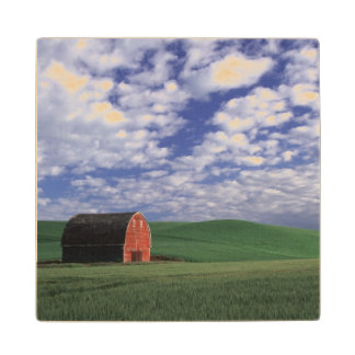 Red barn in wheat & barley field in Whitman Wood Coaster