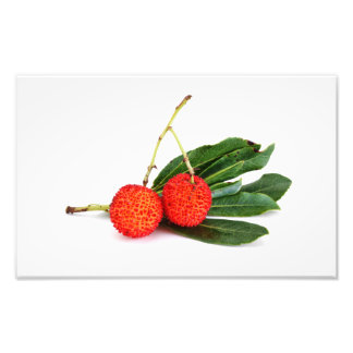 red bayberry photograph