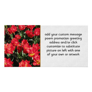 Red Beauties Photo Greeting Card