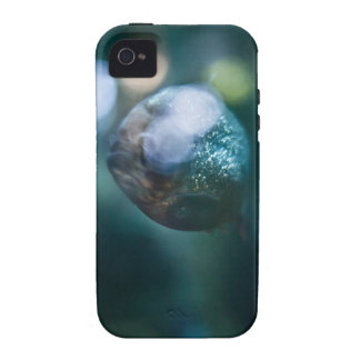 Red Bellied Piranha Vibe iPhone 4 Cases