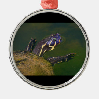 Red Bellied Turtle Ornaments